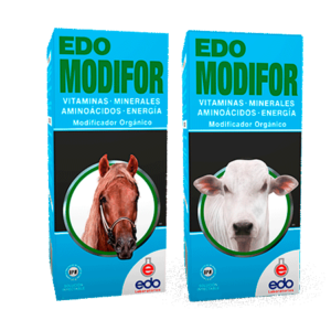 Edo-Modifor