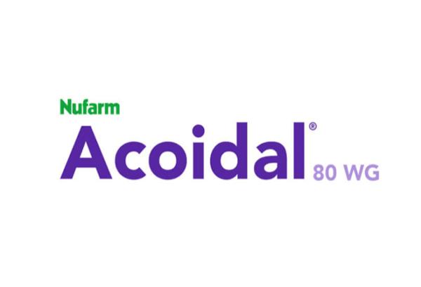 Acoidal