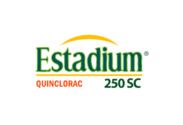 Estadium Logo
