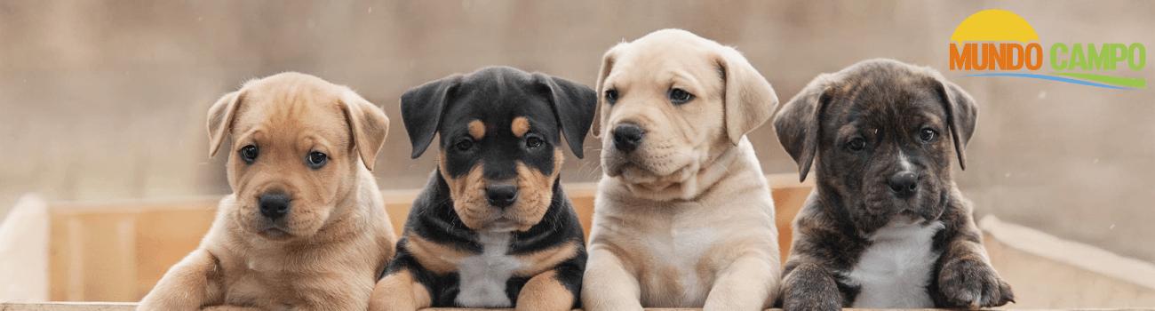 Alimento Cachorro